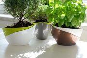 Pěstování bylinek pro zapomětlivé