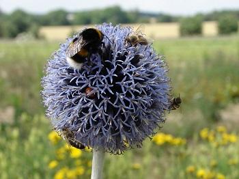 Květinová planeta hmyzu