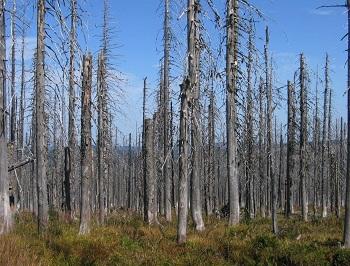 Národní park Šumava 2