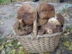 mushrooms 731526 1280